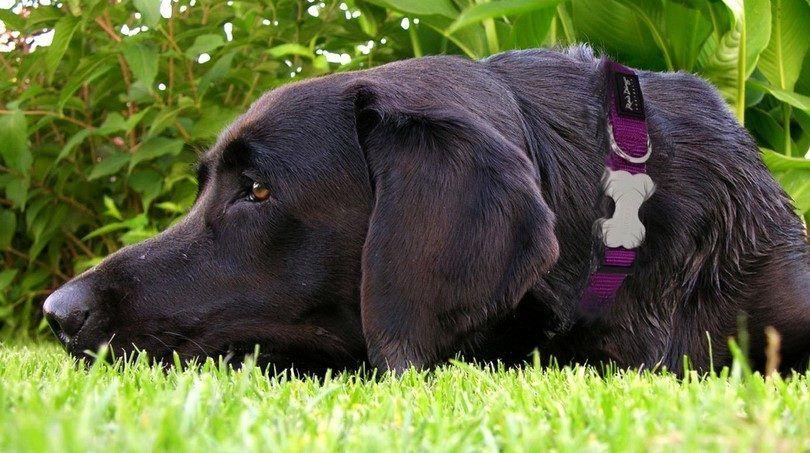 Choisir les meilleurs colliers de chien, laisses et harnais: la sécurité et de la sécurité sur la première place