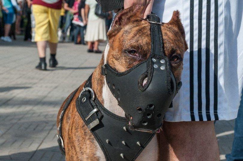 Choisir le meilleur chien museau: produits de best-seller aperçu