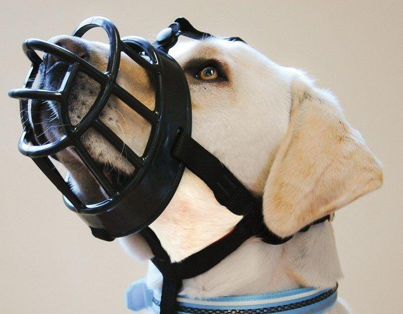 L`Ultra museau de chien Baskerville