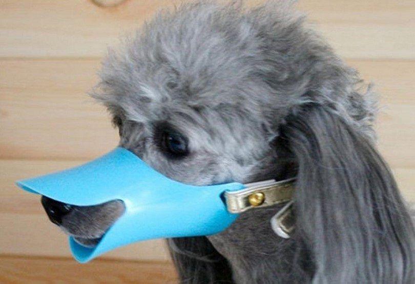 museau de chien de silicone