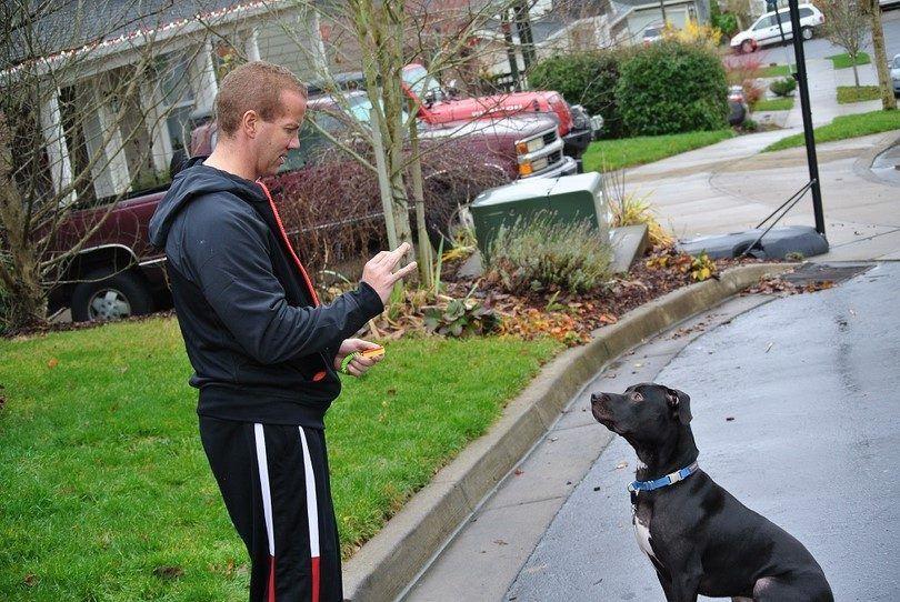 Clicker formation de chien: méthodes et conseils pour rendre le processus de formation plus facile