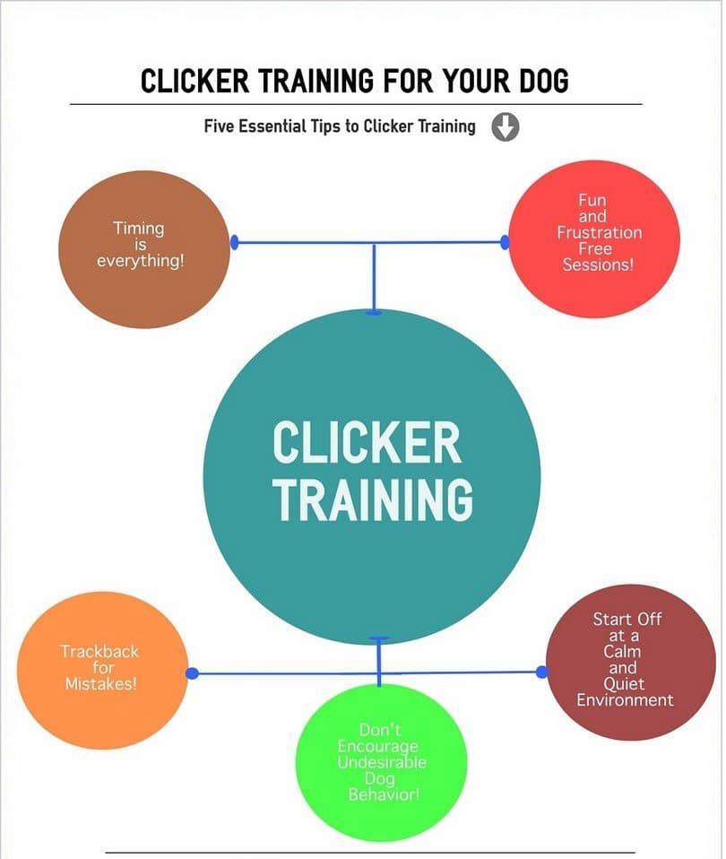 clicker training chien