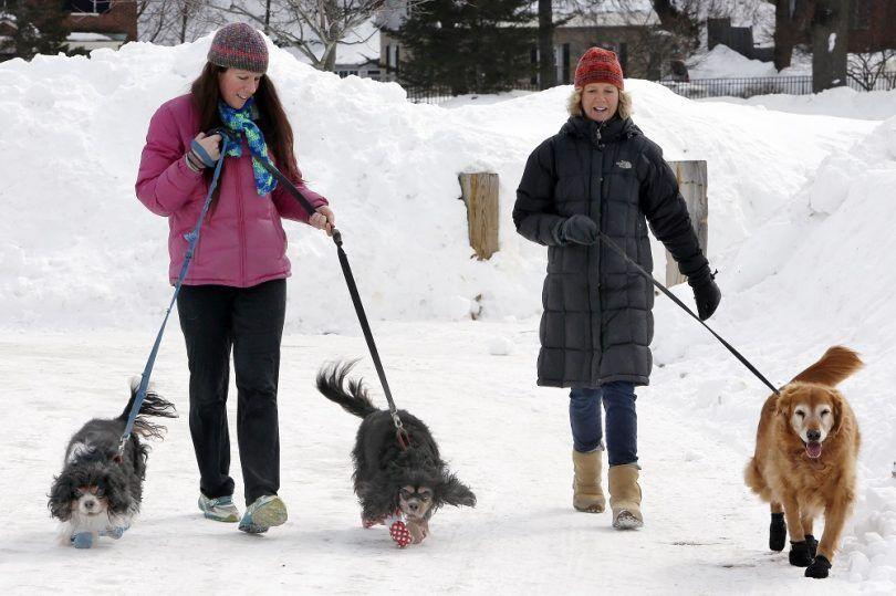 Froid soins météo pour votre chien: protéger fido de l`hiver