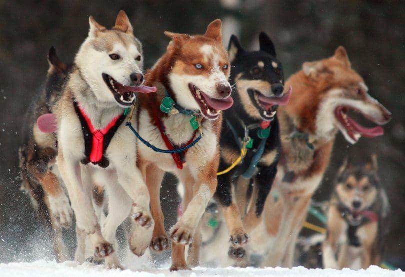 chiens par temps froid