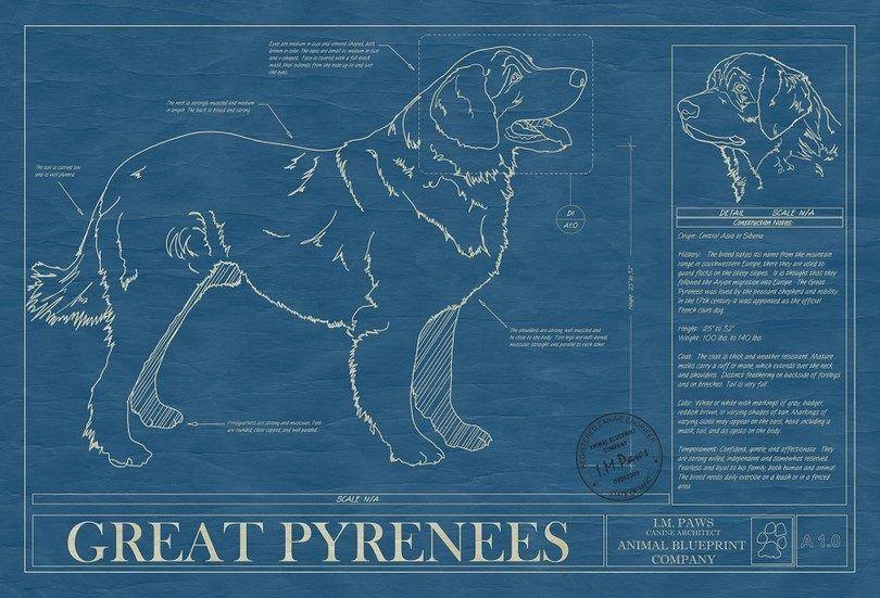 Grands Pyrénées infographique