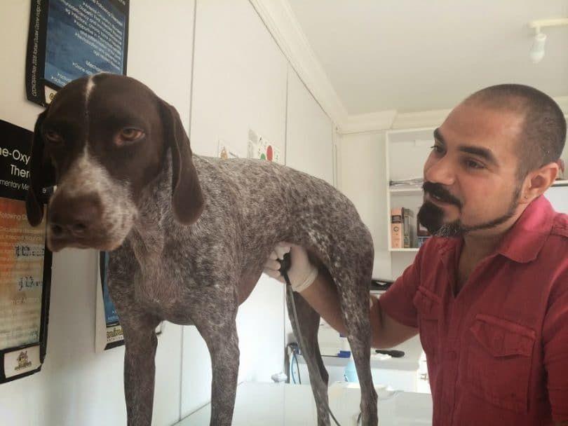 Chien au vétérinaire check up