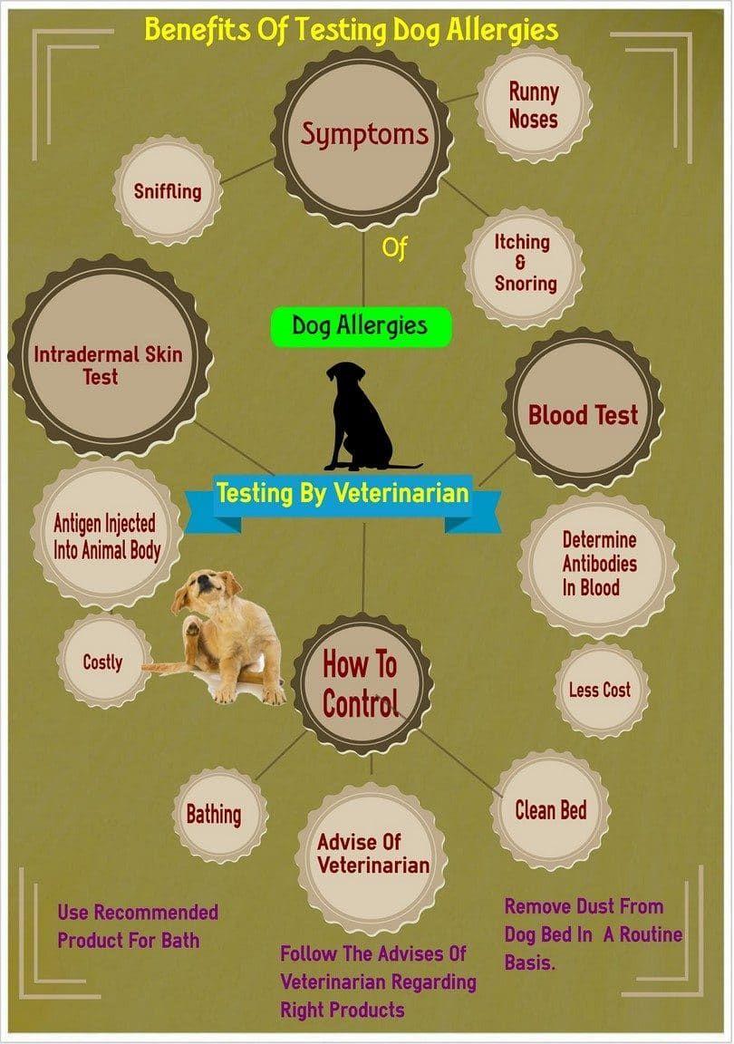Tester vos allergies de chien