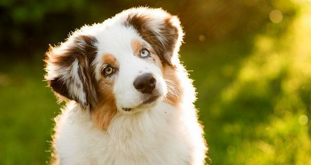 comportements chien communs expliqués