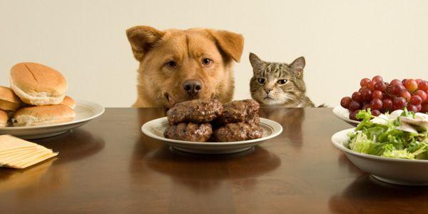 Aliments toxiques pour les chiens