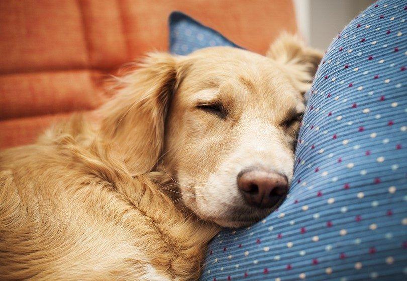 L`insuffisance cardiaque congestive chez les chiens: comprendre et reconnaître les symptômes et les causes