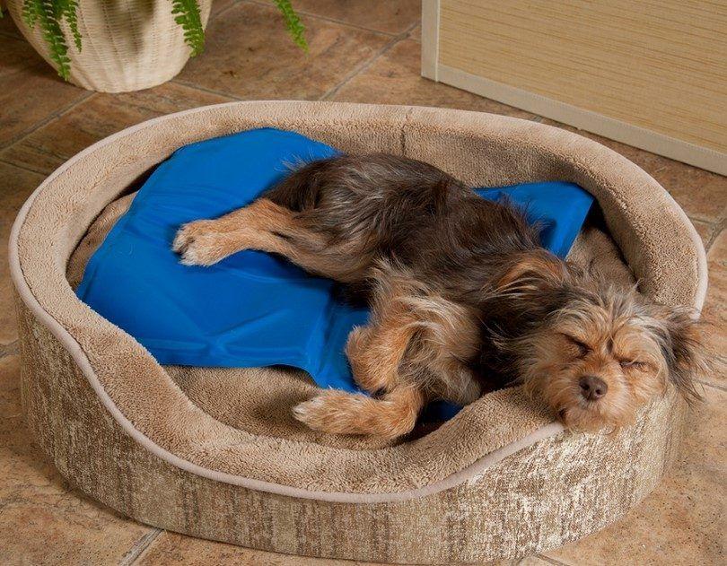 pad de refroidissement pour les chiens: garder votre meilleur ami heureux et fraîche
