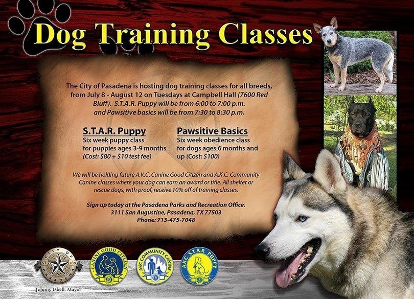classes de formation de chien