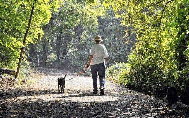 Vos Parcs et Département Rec pourraient donner à votre chien le cancer?