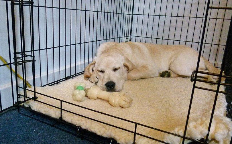 formation Crate chien adulte: étapes à mettre en œuvre pour un bon comportement