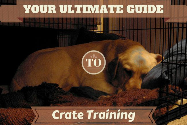 Crate formation - le guide ultime