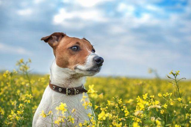 De déparasitage votre chien naturellement