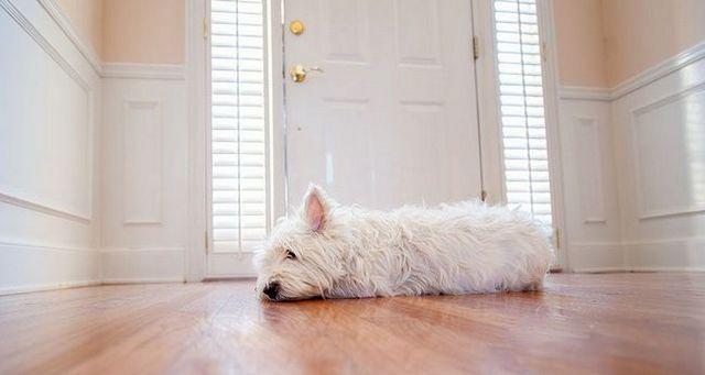 Faire face à l`anxiété de séparation chien