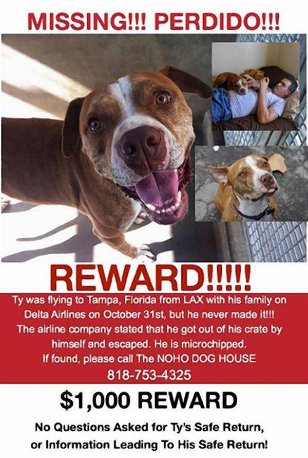 Delta Airlines accusé de perdre chien à lax