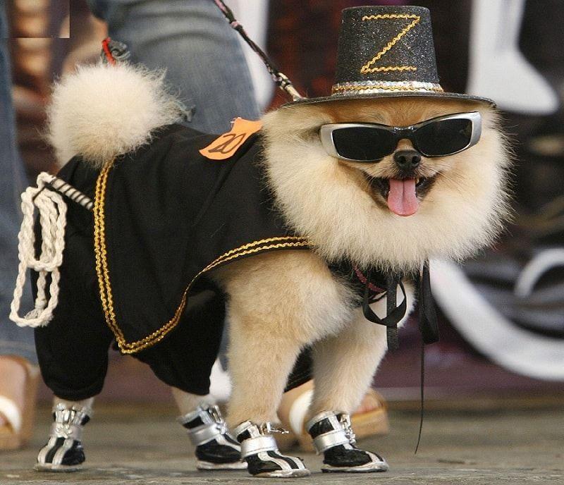 vêtements pour chiens Designer: comment rendre votre animal élégant