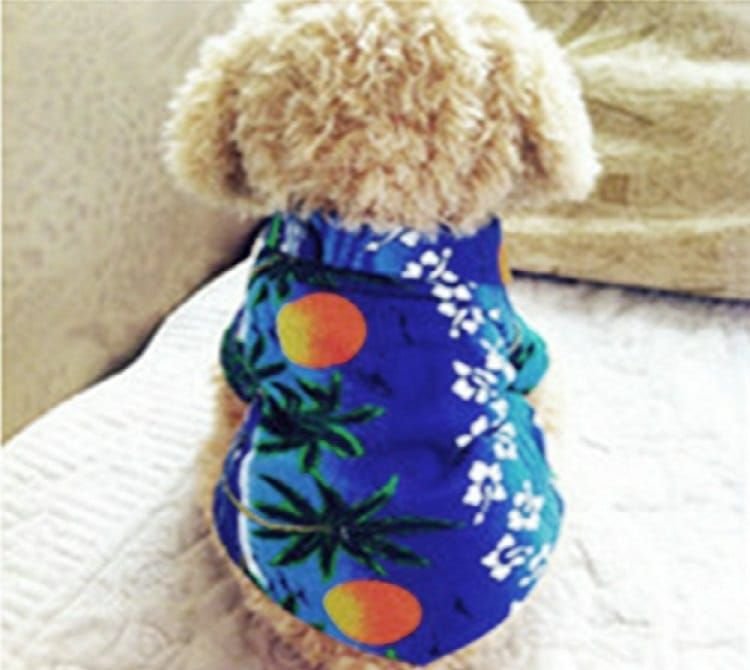 Urparcel Chien Chat T-shirt Vêtements pour animaux domestiques T-shirt