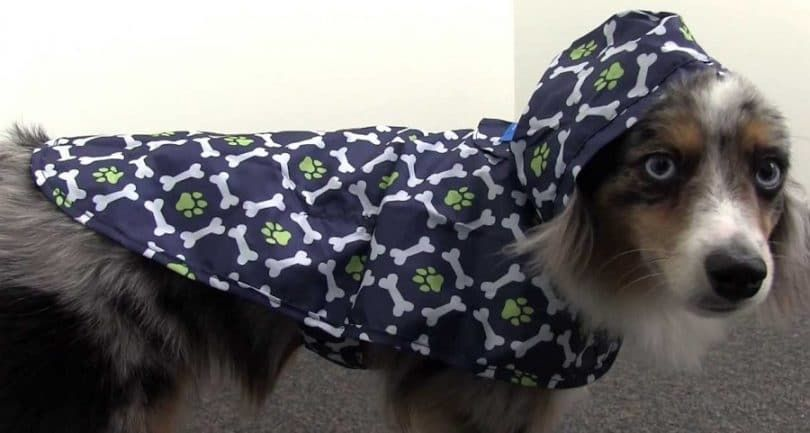 RC Pet Products Packable Dog Poncho de pluie