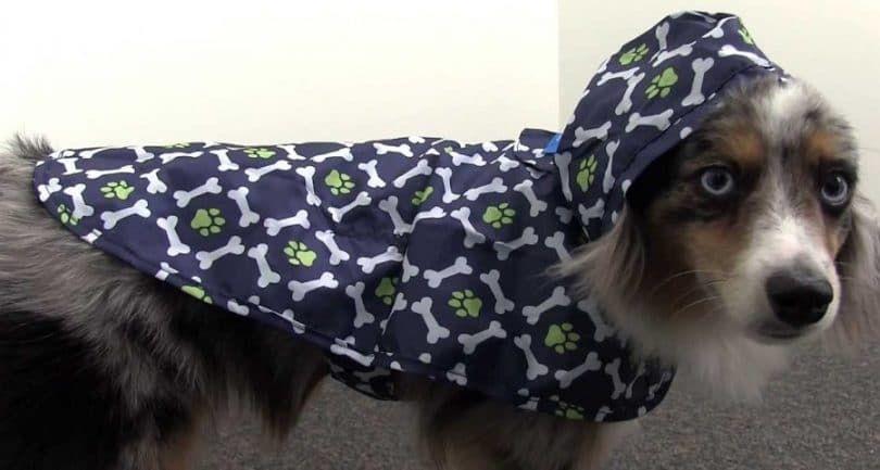 RC Pet Products Packable Dog Poncho de pluie