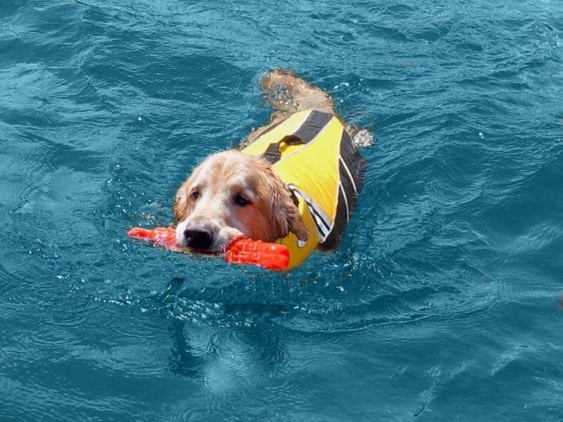 Seadog Pro Jacket La vie de chien