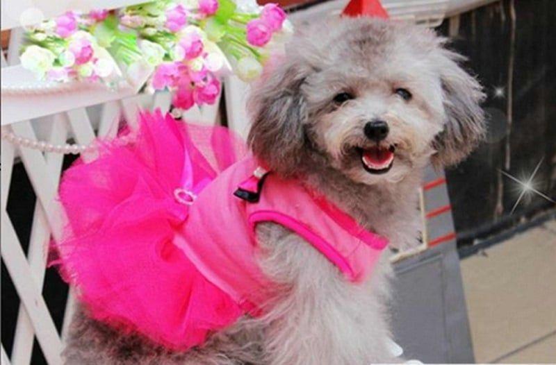 Puppy Vêtements Manteau pour chien Habillement