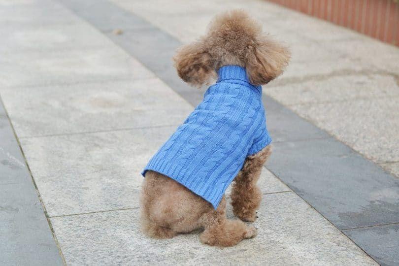 Petta Violet Puppy Turtleneck décent Doggie Cat Sweater