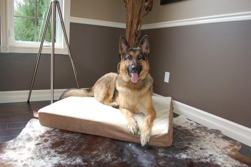 lits pour chiens orthopédiques