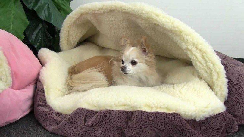 lits pour chiens Cave