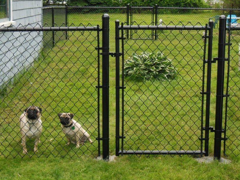 Chiens derrière une clôture
