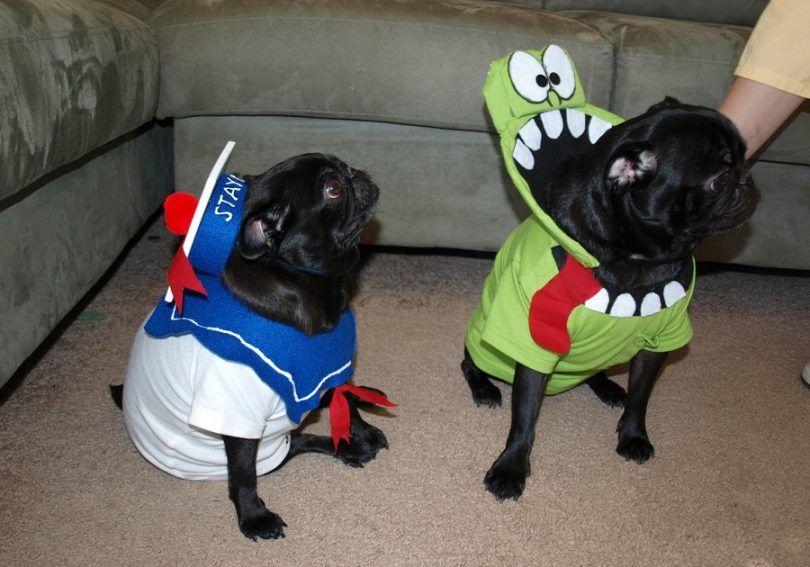 Diy chien costumes d`Halloween: idées étonnantes pour un temps incroyable ensemble