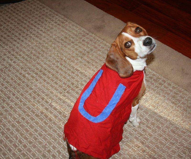 costume Underdog