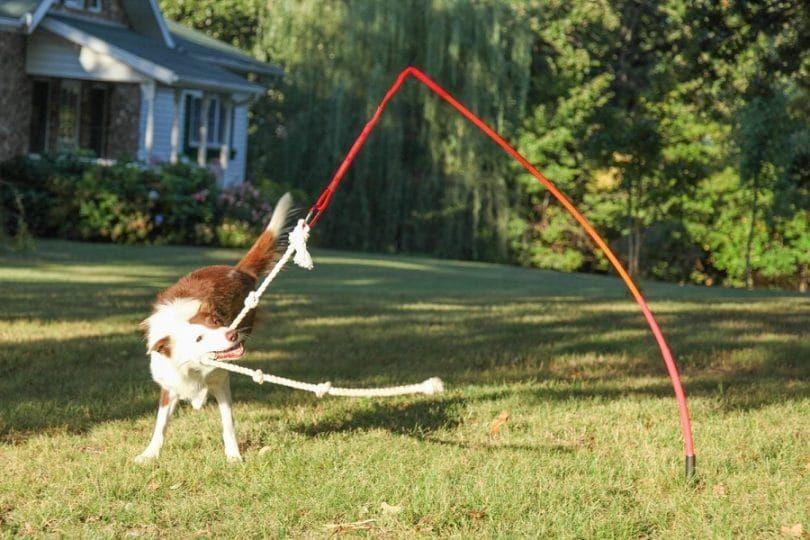 Plein air de chien de jouet interactif