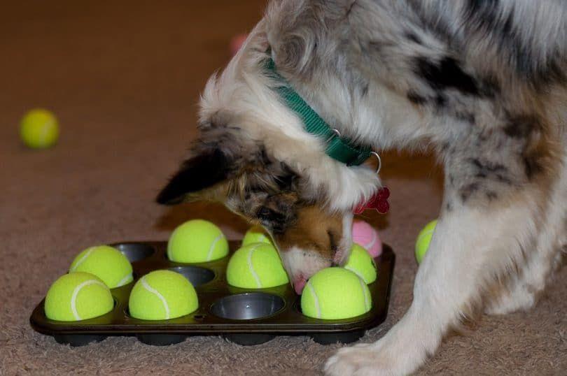 Dog jeu de puzzle