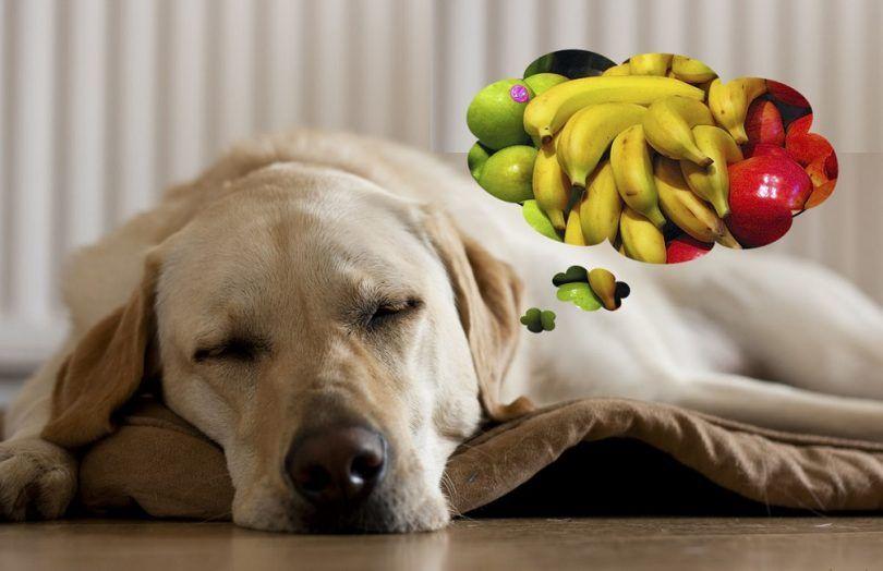 Est-ce que les chiens rêvent: études de psychologie et des résultats de recherche
