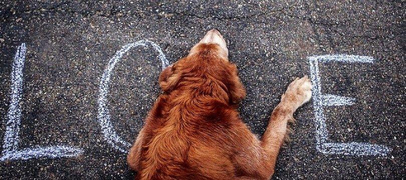 Est-ce que mon chien aime moi? Comprendre les émotions canines