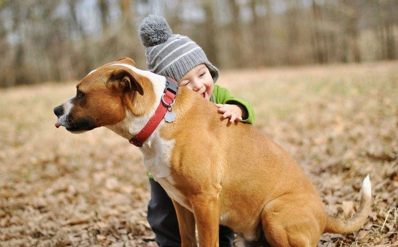 Petit enfant et amour de chien