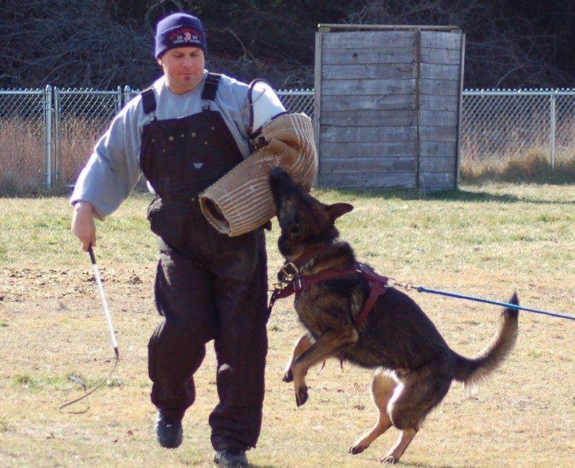 Former un chien pour attaquer