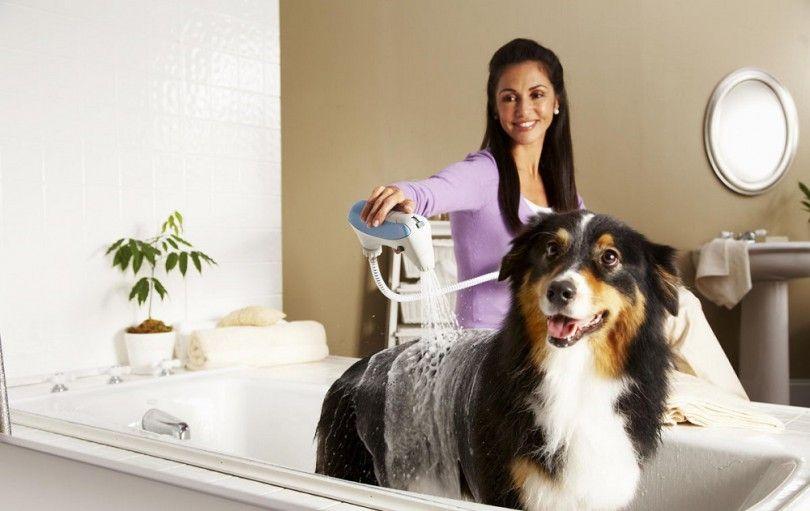 traitement de l`allergie chien: garder votre chien heureux et en santé