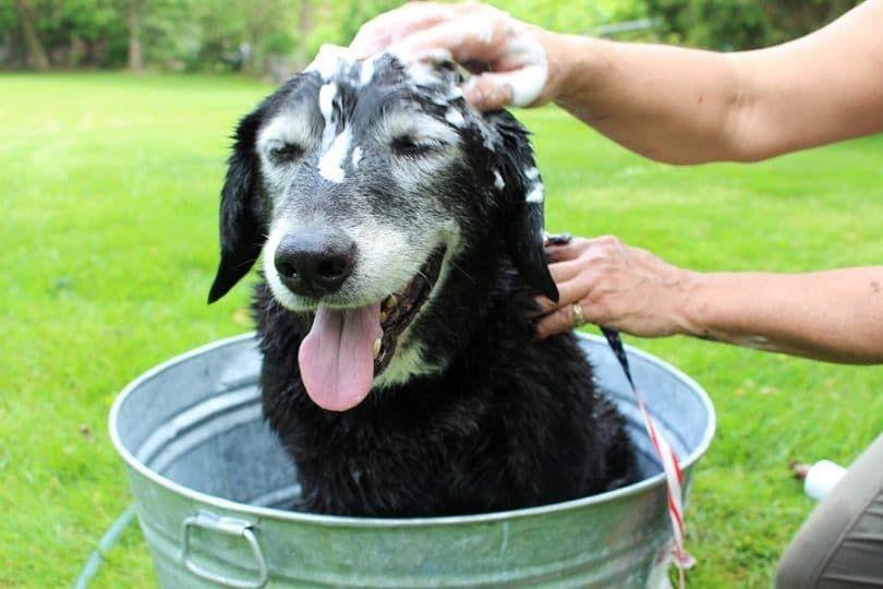 Vétérinaire`s Best Hypoallergenic Shampoo with Aloe Vera
