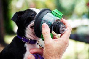 entretoise pour le traitement de l`asthme de chien