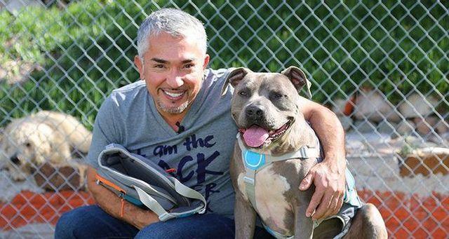 Cesar Millan avec son chien junior portant un sac à dos pour chien