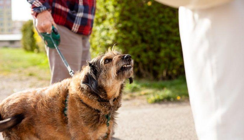 Dog morsure procès: apprendre à rester en sécurité avec pointe
