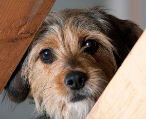 Vidéo: ce que votre chien essaie désespérément de vous dire!
