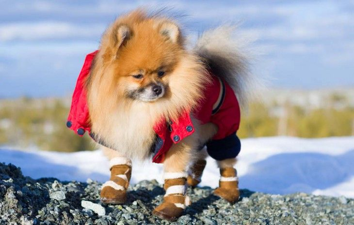 Chaussons Dog pour Snow