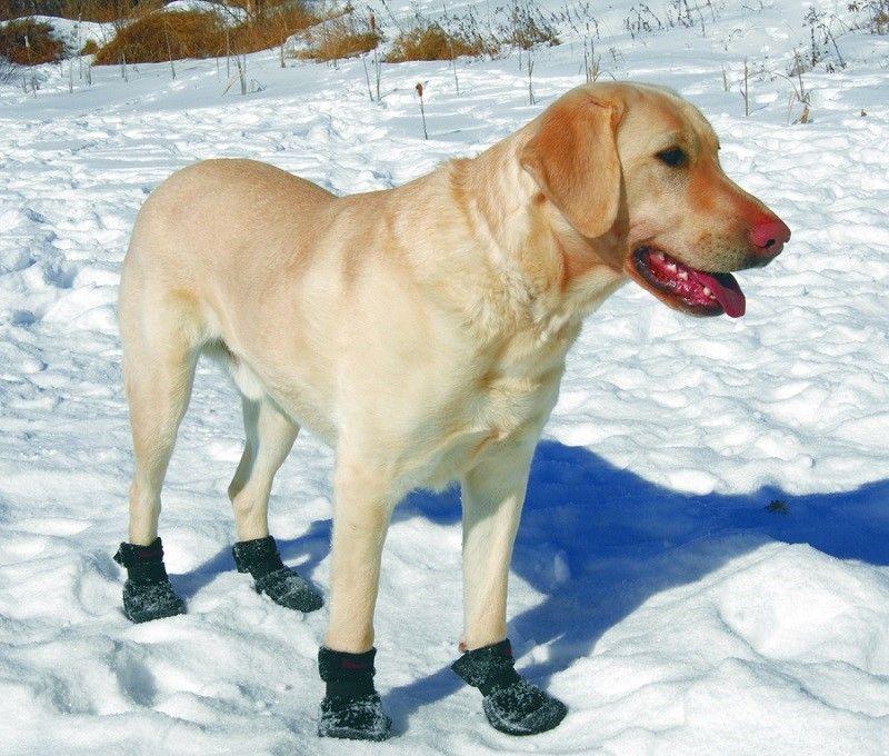 Bottes sur le chien dans la neige