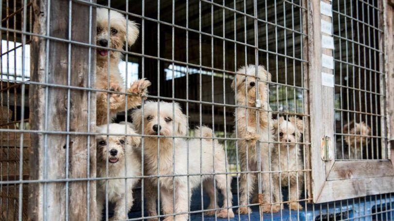 lois de reproduction de chiens: traitement animaux avec bonté