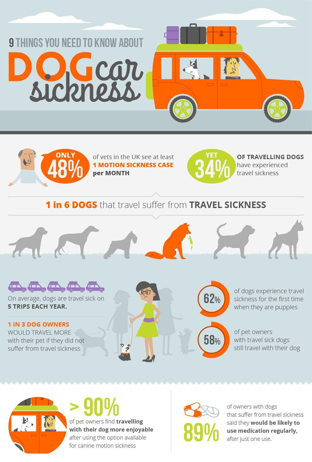 Chien maladie de voiture: symptômes et méthodes de prévention pour votre chien
